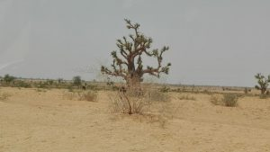 YOBE STATE TREE POACHING