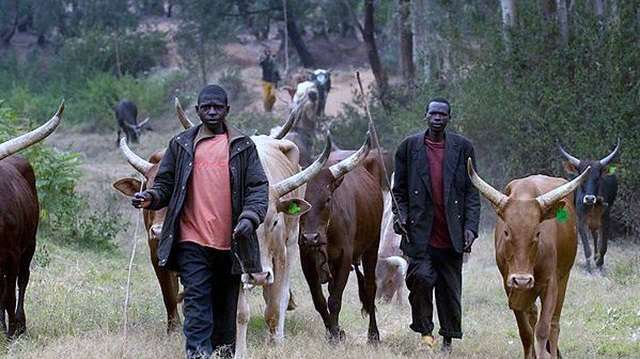 Herdmen kill 5 in Yola, 3 in Benue
