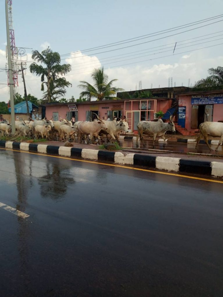 {filename}-Herdsmen Dares Gov. Umahi, Block Express In Ebonyi State