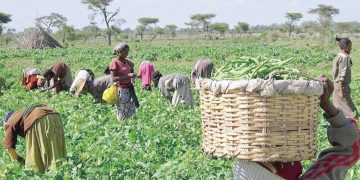 Food Security: Osun farmers, stakeholders hold special confab