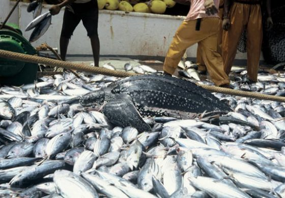Specie of grass eating fish should be encouraged for business- Society