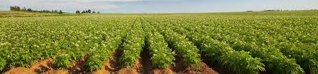 Belarus to partner Benue to expand agric-value chain