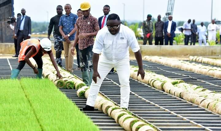 Cross River Rice Seedlings for the South South zone arrives Bayelsa State
