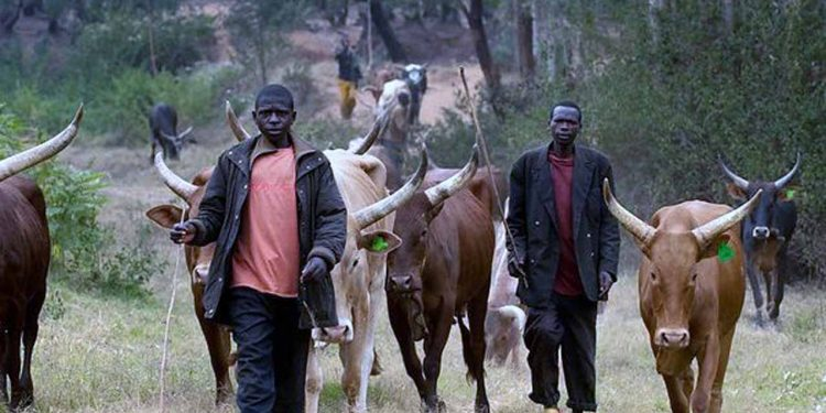 Return home - northern elders tell herdsmen
