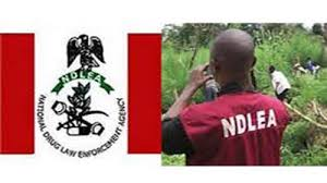 ICT firm defends integrity over NDLEA recruitment