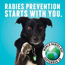 World Rabies Day: Govt to mark free anti-rabies vaccination in Ondo