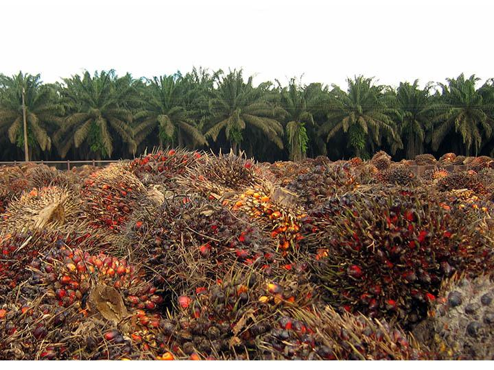 Stakeholders endorse NISCOPS to boost oil palm production in Nigeria