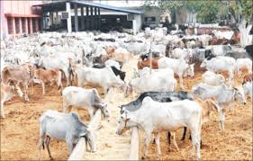 Dairy farmer seeks young graduates to embrace cattle farming