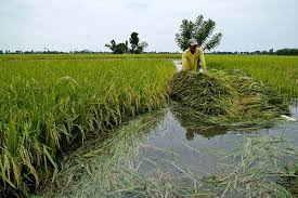 Ministry, RIFAN comes together to boost rice production